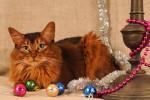 Un Somali allongé à côté de décorations de Noël