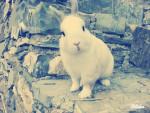 yoyo mon petit lapinou - Male (3 years)