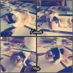 Tris & Tobias - (1 month)