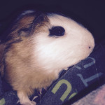 Chamallow - (7 months)