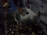 Miro - Male (4 months)